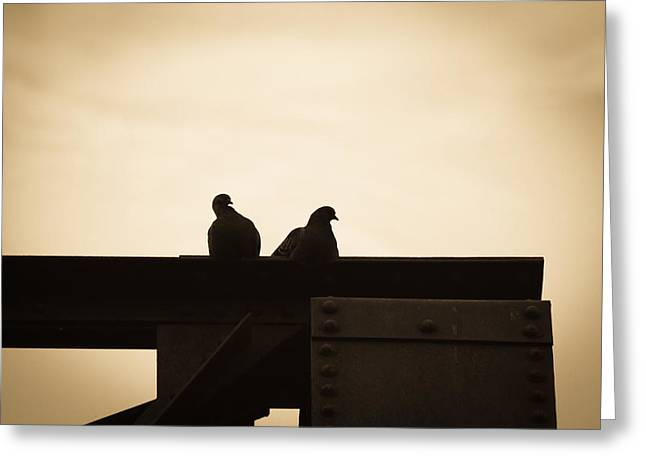 Bird Photographs Greeting Cards - Pigeon and Steel Greeting Card by Bob Orsillo
