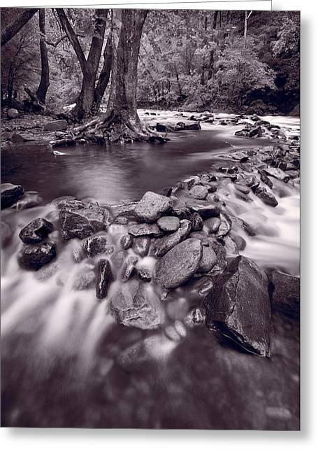 Smoky Greeting Cards - Pigeon Forge River Great Smoky Mountains BW Greeting Card by Steve Gadomski