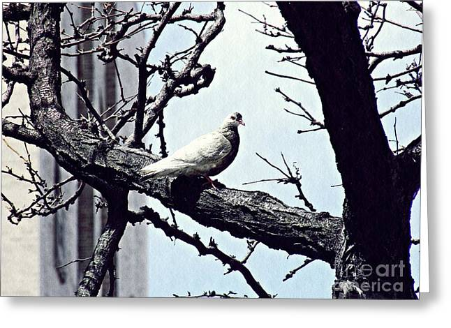 Feral Pigeon Greeting Cards - Pigeon in a Tree Greeting Card by Sarah Loft