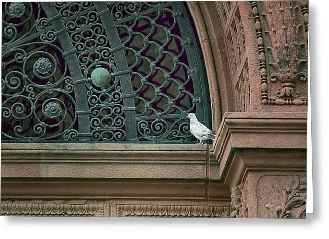 Feral Pigeon Greeting Cards - Pigeon - The Omaha Building Greeting Card by Nikolyn McDonald