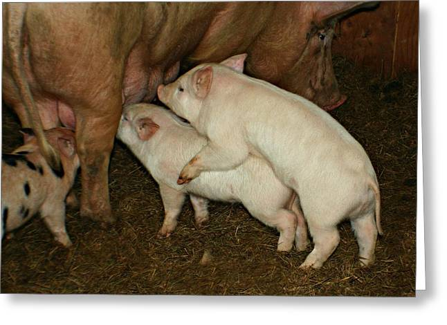 Piglets Greeting Cards - Piggy Back Brunch Greeting Card by Barbara S Nickerson