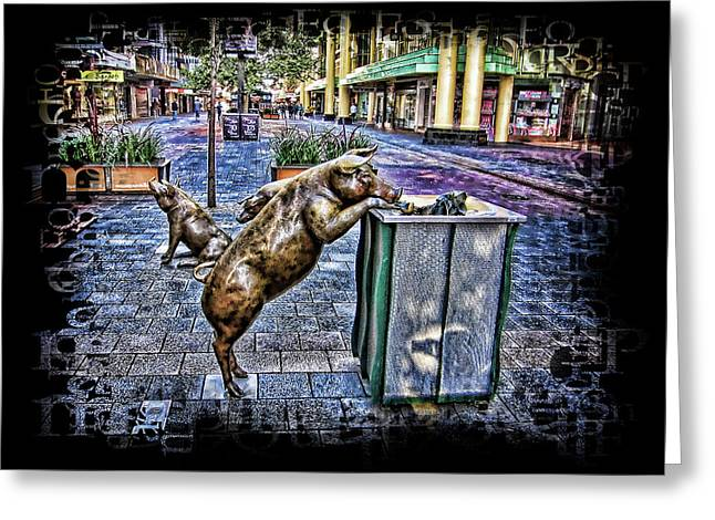 Rundle Greeting Cards - Pigs Greeting Card by Douglas Barnard