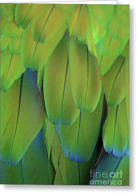 Macaw Art Greeting Cards - Piha Oe I Ka Maikai Greeting Card by Sharon Mau