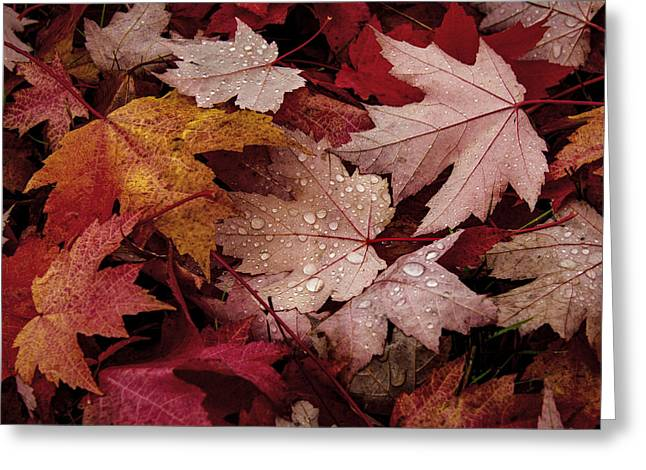 Pile Of Leaves Greeting Card by Jean Noren
