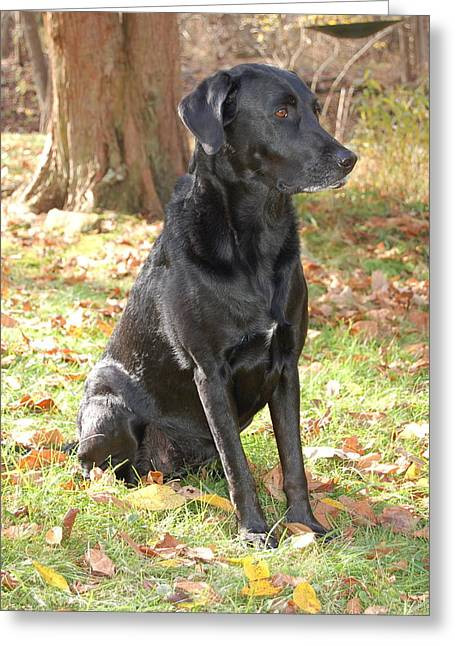 Recently Sold -  - Mixed Labrador Retriever Greeting Cards - Pinda in Autumn Greeting Card by Sherri Strikwerda