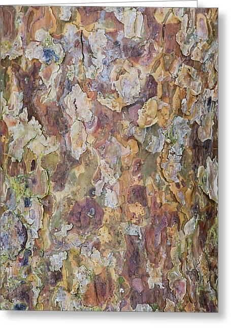 Pine Bark Greeting Card by Tim Gainey