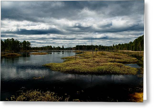 New Jersey Pine Barrens Greeting Cards - Pine Barrens Greeting Card by Louis Dallara