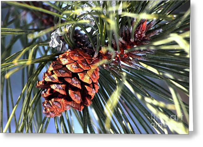 Pine Cone Greeting Card by Marjorie Imbeau