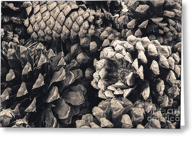 Pine Cone Study Greeting Card by The Forests Edge Photography - Diane Sandoval