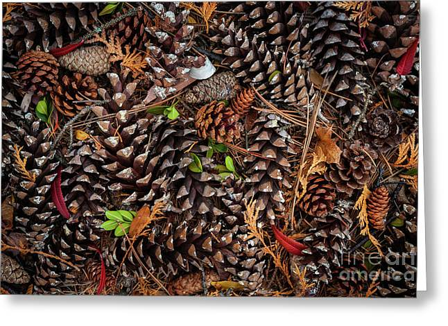 Pine Cones Greeting Card by Elena Elisseeva