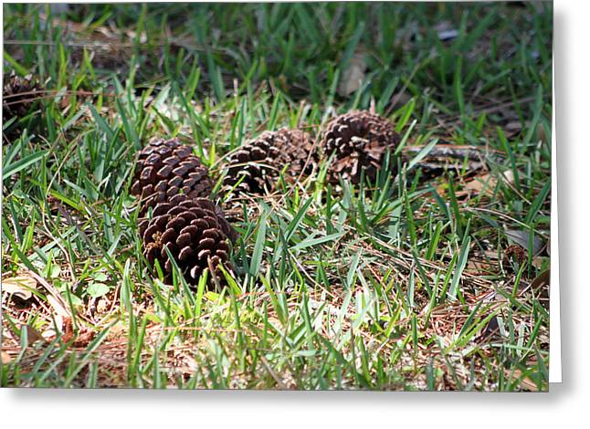 Pine Cones Greeting Cards - Pine Cones Greeting Card by Evelyn Patrick