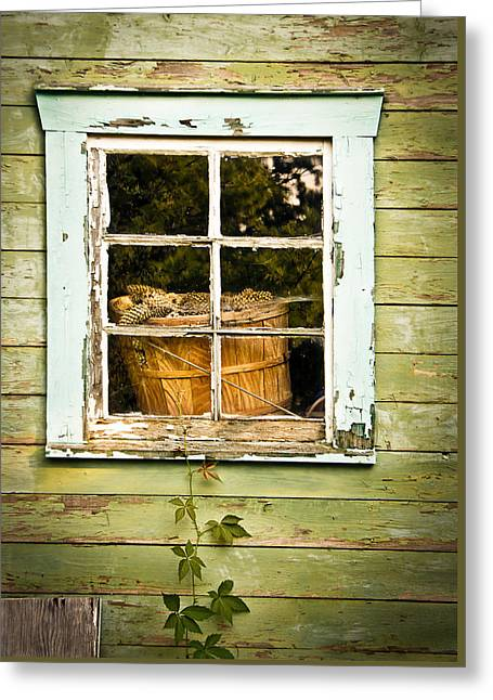 Sheds Greeting Cards - Pine Cones in the Window Greeting Card by Maggie Terlecki