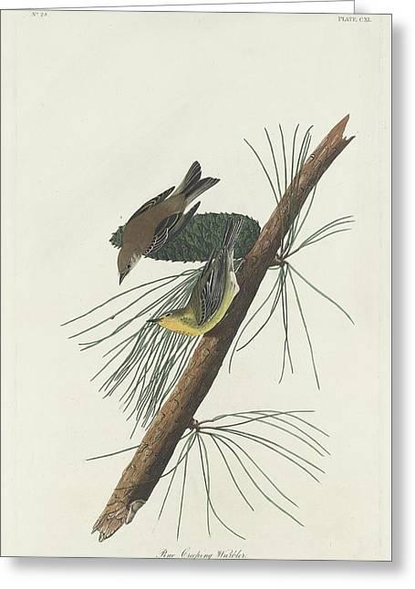 Pine Tree Drawings Greeting Cards - Pine Creeping Warbler Greeting Card by John James Audubon