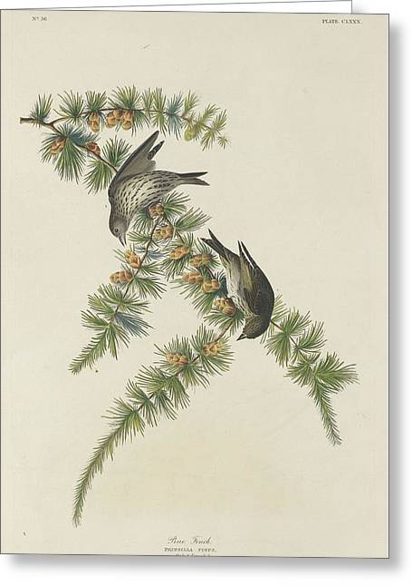 Small Bird Greeting Cards - Pine Finch Greeting Card by John James Audubon