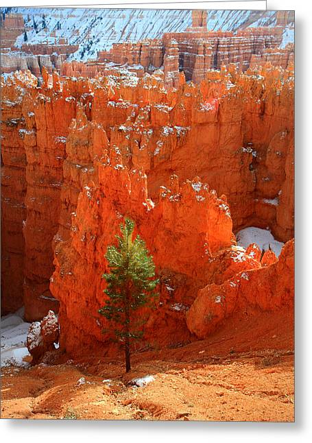 Road Trip Greeting Cards - Pine Hoodoos at Bryce Canyon Greeting Card by Pierre Leclerc Photography