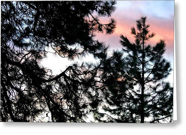 Tree Silhouette At Sunset Greeting Cards - Pine Silhouettes At Sundown Greeting Card by Will Borden