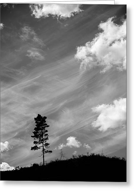 Tree Roots Digital Art Greeting Cards - Pine silhouettes Greeting Card by Toppart Sweden