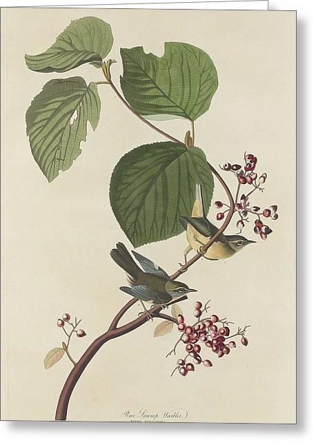 Pine Tree Drawings Greeting Cards - Pine Swamp Warbler Greeting Card by John James Audubon