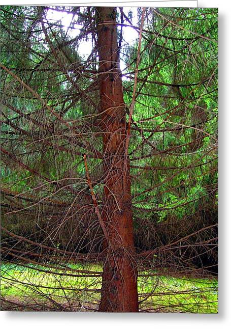 Pine Needles Greeting Cards - Pine Swirl Greeting Card by Mindy Newman