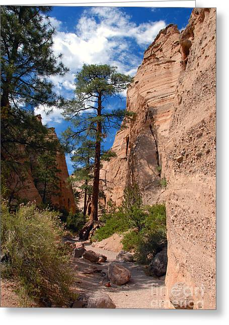 Tent Rocks Canyon Greeting Cards - Pine tree canyon Greeting Card by David Lee Thompson