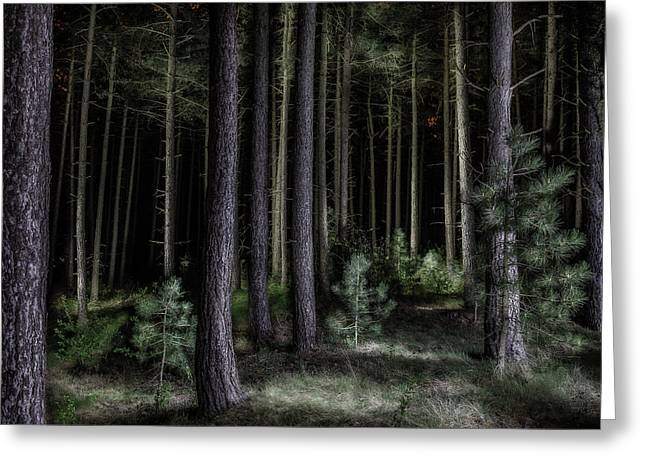 Pine Tree Forest At Night Greeting Card by Dirk Ercken