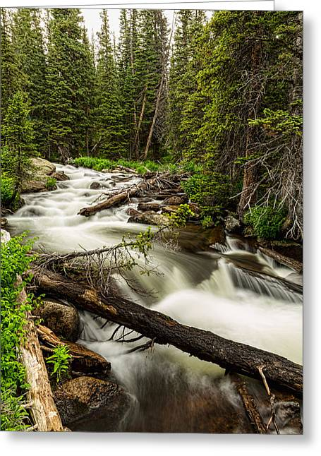Beauty Creek Greeting Cards - Pine Tree Forest Creek Portrait Greeting Card by James BO  Insogna