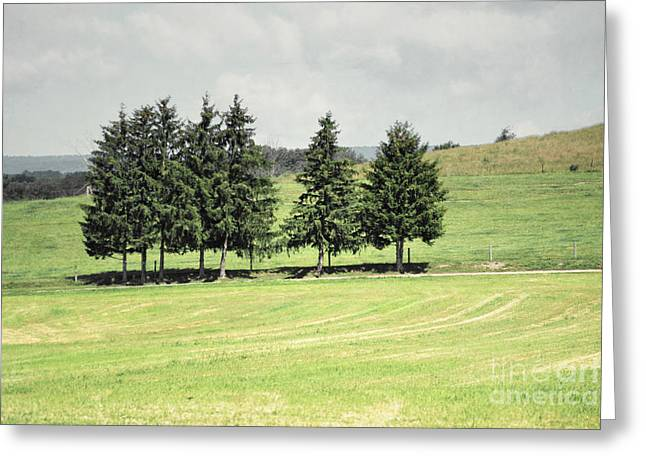 Amish Farms Greeting Cards - Pine Trees Farm Field Greeting Card by Andrea Hazel Ihlefeld