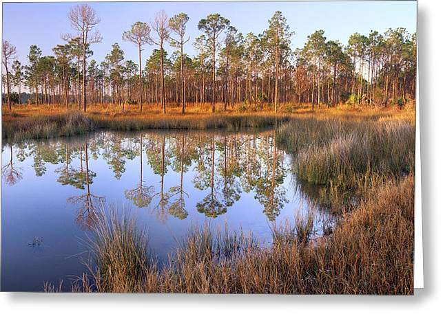 Pinaceae Greeting Cards - Pine Trees Reflected In Pond Near Piney Greeting Card by Tim Fitzharris
