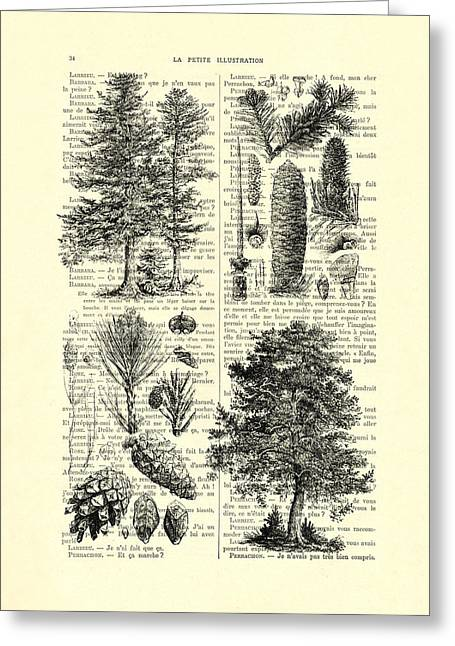 Pine Trees Study Black And White  Greeting Card by Madame Memento
