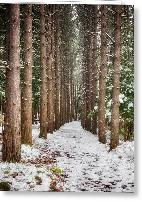 Pine Trees - Winter At Retzer Nature Center  Greeting Card by Jennifer Rondinelli Reilly - Fine Art Photography