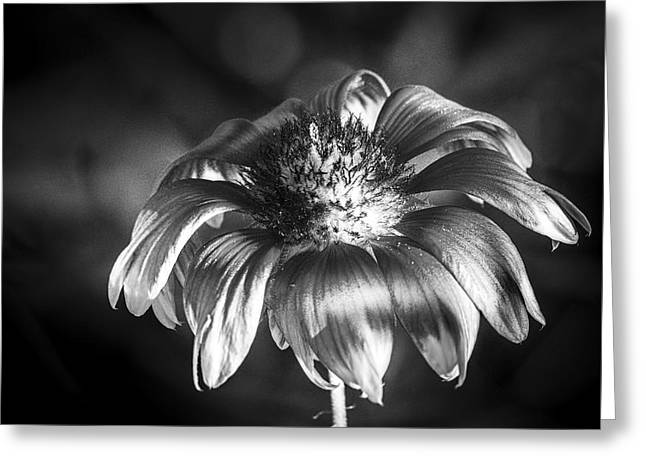 Pineapple Butter Cup B/w Greeting Card by Marvin Spates