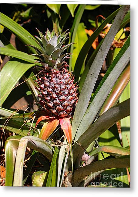Pineapple In Nature By Kaye Menner Greeting Card by Kaye Menner