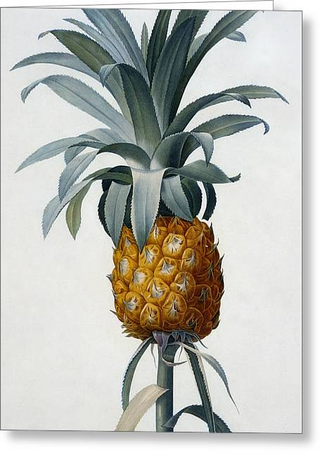 Tropical Fruit Greeting Cards - Pineapple Greeting Card by Pierre Joseph Redoute
