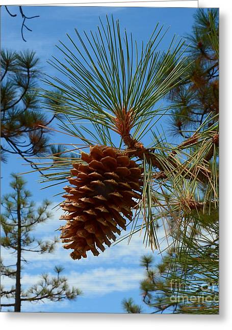 Purchase Greeting Cards - Pinecone Greeting Card by Patrick Witz
