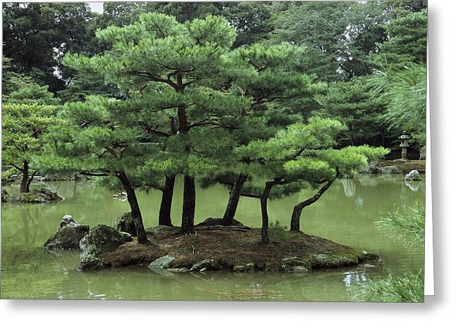 Honshu Greeting Cards - Pines On Island In The Gardens Greeting Card by Tim Laman
