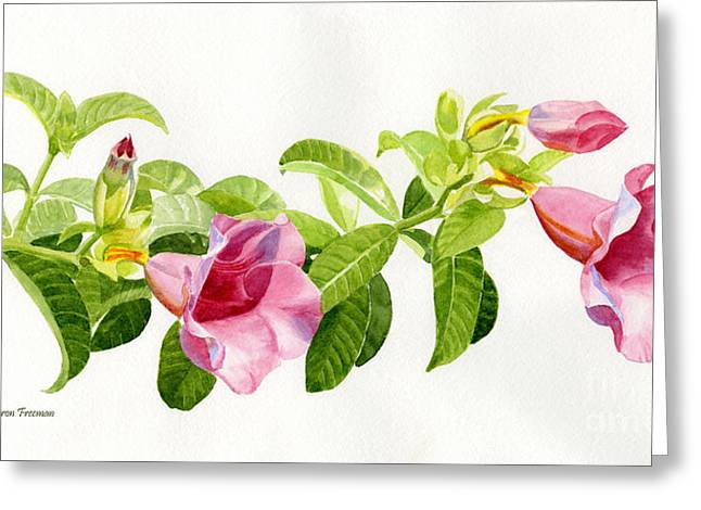 Pink Blossoms Paintings Greeting Cards - Pink Allamanda Blossoms on a Branch Greeting Card by Sharon Freeman