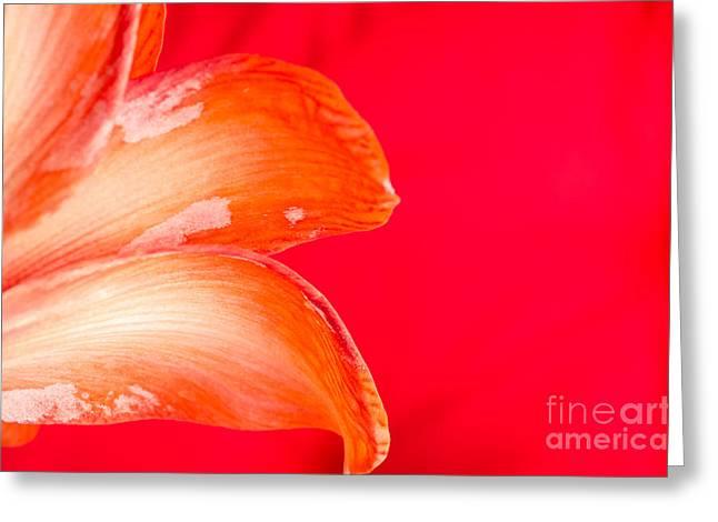 Pink Flower Greeting Cards - PINK AMARYLLIS orange amaryllis in a pink room Greeting Card by Andy Smy