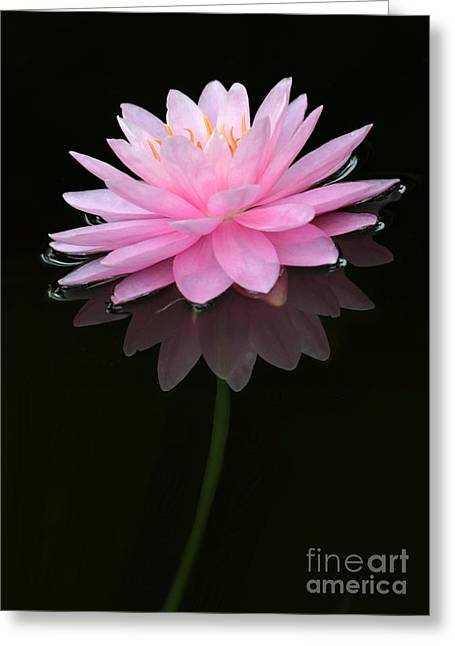 Water Garden Greeting Cards - Pink and Alone Greeting Card by Sabrina L Ryan
