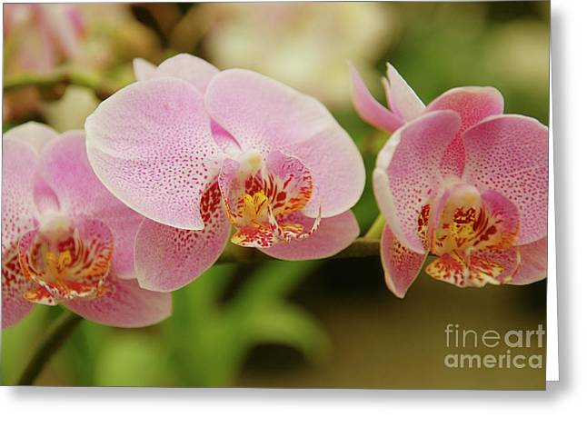 Garden Center Greeting Cards - Pink and Beautiful Greeting Card by Susanne Van Hulst
