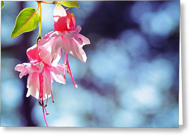 Pink And Blue Greeting Card by SK Pfphotography