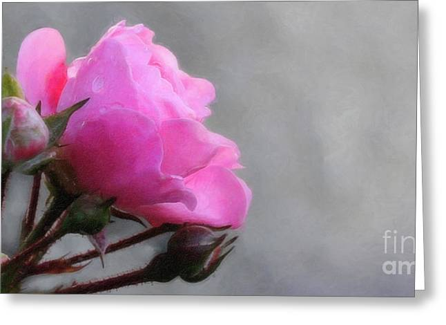 Rose Photos Greeting Cards - Pink and Grey Rose Greeting Card by Lutz Baar