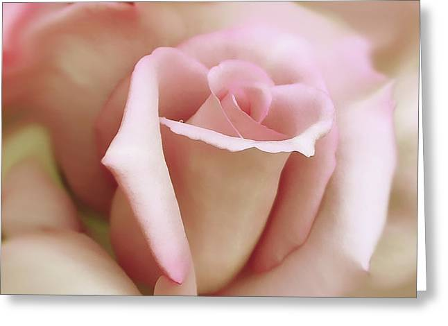 Pink and Ivory Rose Portrait Greeting Card by Jennie Marie Schell