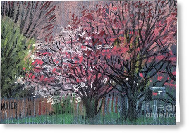 Dogwood Greeting Cards - Pink and White Dogwoods Greeting Card by Donald Maier