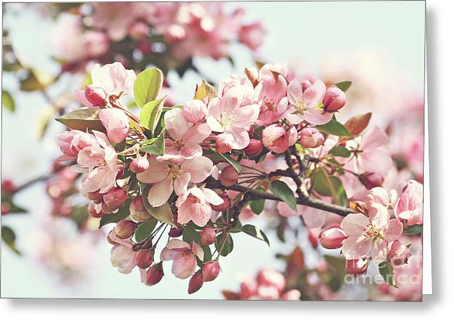 Border Photographs Greeting Cards - Pink apple blossoms Greeting Card by Sandra Cunningham