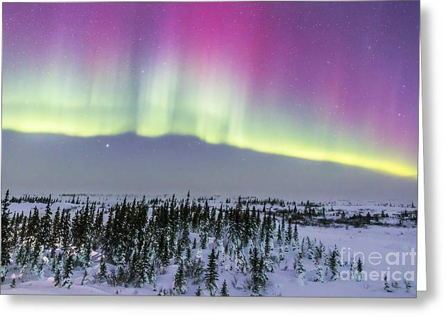 Nature Study Greeting Cards - Pink Aurora Over Boreal Forest Greeting Card by Alan Dyer