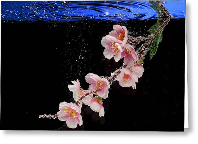 Artist Photographs Greeting Cards - Pink Blossom in Water with Bubbles Greeting Card by Dmitry Soloviev