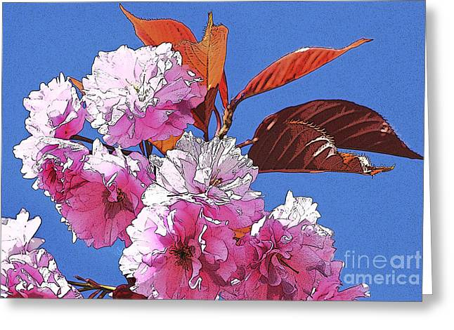 Coloured Greeting Cards - Pink Blossom Greeting Card by Wendy Wilton