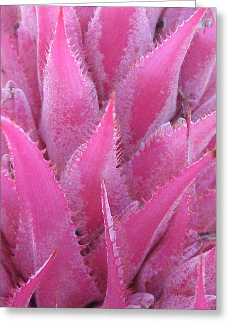 Prickly Greeting Cards - Pink Cactus Greeting Card by Nikki Smith