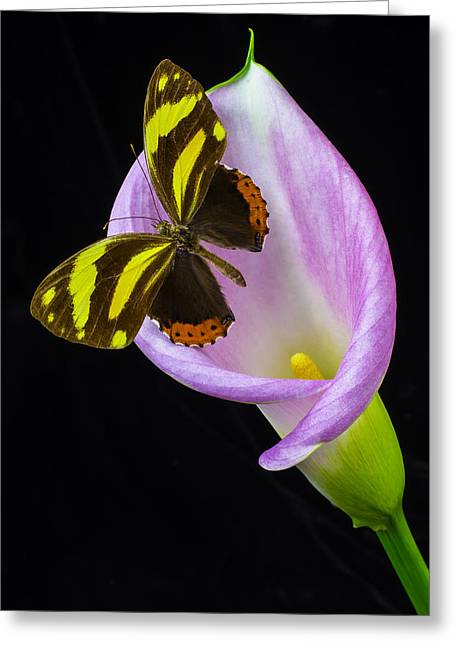 Pink Calla And Beautiful Butterfly Greeting Card by Garry Gay