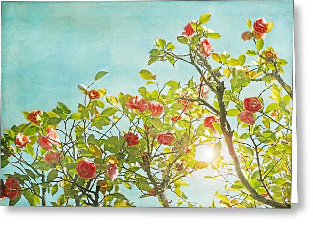 Pink Camellia Japonica Blossoms And Sun In Blue Sky Greeting Card by Brooke Ryan